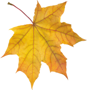 autumn_leaves_PNG3571